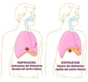 Diaframma muscolo delle emozioni 2