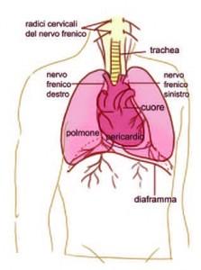 Diaframma muscolo delle emozioni