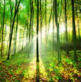 Meditare sotto un albero_Faggio