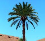 Meditare sotto un albero_Palma
