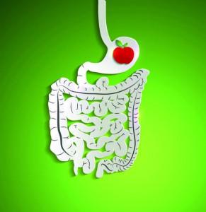 intestino img