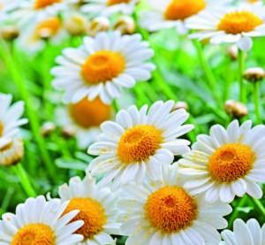piante antifreddo 1