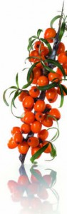 piante antifreddo 2
