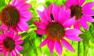 piante antifreddo 5